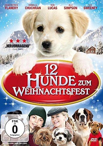 Kragen Weihnachten Hund (12 Hunde zum Weihnachtsfest)