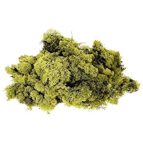 Inerra Finlande Mousse - Olive - Rennes Mousse Loisirs Créatifs Plante Pot Fleurs Écran D'Affichage Modelage - Olive, 400 Grams