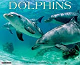Dolphins 2015 Wall Calendar by Willow Creek Press (2014-06-15)