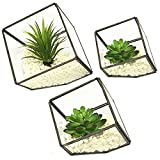 Happy Bonsai kilofly 3Glas Terrarium Cube Tischplatte Sukkulente Übertopf Blumen Container Topf