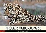 KRÜGER NATIONALPARK Afrikas Perle (Wandkalender 2019 DIN A4 quer): Faszinierende Tiere und Natur (Monatskalender, 14 Seiten ) (CALVENDO Tiere)