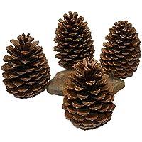 Weiß Pinecone Strobus Pinienzapfen 6 natürliche Tannenzapfen White Wash