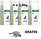 Royal Canin Obesity ( 4 x 3,5 kg ) MEGA PACK Katzenfutter + GRATIS, LANGE VARFALLSDATUM