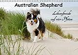 Australian Shepherd - Lebensfreude auf vier Pfoten (Wandkalender 2019 DIN A3 quer): Die Abenteuer eines powervollen Australian Shepherd (Monatskalender, 14 Seiten ) (CALVENDO Tiere)