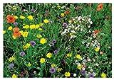 30x Mischung Wildblumen speziell mix - Samen Pflanze Blumen Garten KS42
