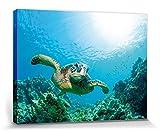 1art1 55166 Unterwasserwelt - Meeres-Schildkröte Über Sonnendurchflutetem Korallenriff Poster Leinwandbild Auf Keilrahmen 80 x 60 cm