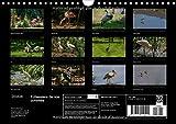 Image de Echassiers de nos contrées : Des oiseaux en pleine nature. Calendrier mural A4 horizontal 2016