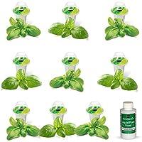 Kit de capsules de graines de basilic pesto (9 capsules) Miracle-Gro AeroGarden