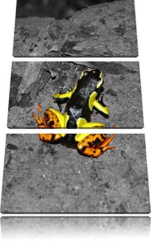 teinturier-petite-grenouille-sol-de-la-foret-blanche-3-pieces-image-en-noir-canvas-art-120x80-sur-to