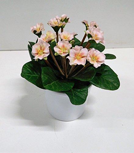 Usambaraveilchen  <strong>Blütezeit</strong>   Februar - Oktober