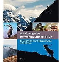 Wanderungen zu Murmeltier, Steinbock & Co.: Die besten Gebiete für Tierbeobachtungen in der Schweiz