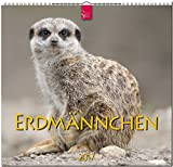 ERDMÄNNCHEN - Original Stürtz-Kalender 2017 - Mittelformat-Kalender 33 x 31 cm