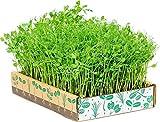 Semi organici: Il Simply Good Box di casa Verdi - Il modo più semplice per crescere Microgreen stupefacente da Farmerly