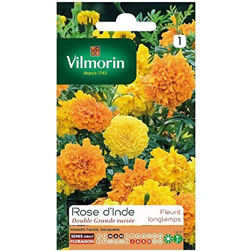 Vilmorin - Sachet graines Rose d'inde double grande variée