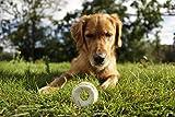 8in1 Delights Kauringe (gesunder Kausnack in Ringform für größere Hunde über 20 kg, hochwertiges Hähnchenfleisch), 3 Stück (119 g) - 5