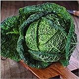 Paquete de 300 semillas, Saboya La perfección de col Semillas (Brassica oleracea)