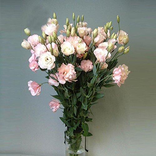 20pcs Graines de Rose rosier blanc violet RARE Parfumée Fleurs rose jardin multicolore Fleurs vivaces en pot