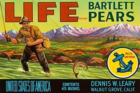 Art on a Budget Retrolabel Life Brand Bartlett Pears Stretched Canvas Artwork by Art on a Budget