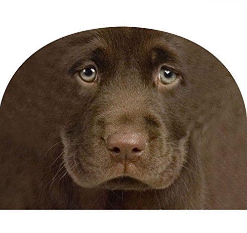 Kaffeewärmer Labrador braun - Kaffeemütze Teewärmer Kannenwärmer