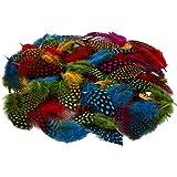 Plumas de gallina de Guinea, surtido de colores,...