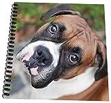 Carsten Reisinger Fotografie–Cute Boxer Dog Portrait Hunde–Zeichnen Buch, 4 Inches x 4 Inches
