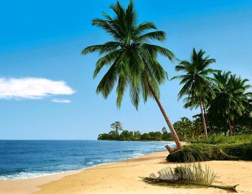 """Komar Fototapete """"African Beach"""", 8-teilig, 388x277 cm, traumhafter Palmenstrand an der Elfenbeinküste. Made in Germany."""