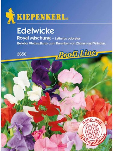 Lathyrus odoratus Edelwicken Royal Mischung