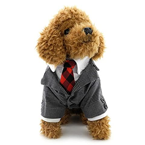 Selmai Petit Chien Plaid Tuxedo Rouge Cravate Weekend temps ;