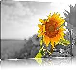 Nahaufnahme einer Sonnenblume schwarz/weiß Format: 80x60 auf Leinwand, XXL riesige Bilder fertig gerahmt mit Keilrahmen, Kunstdruck auf Wandbild mit Rahmen, günstiger als Gemälde oder Ölbild, kein Poster oder Plakat