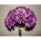 (g01) bunch of 6 lilac/purple artificial gerbera stems ideal 4 weddings flowers