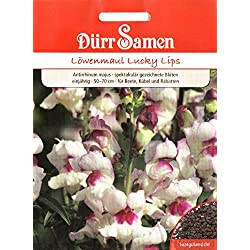 Löwenmaul, Lucky Lips, erstaunliche Blüten, Antirrhinum majus, ca. 250 Samen
