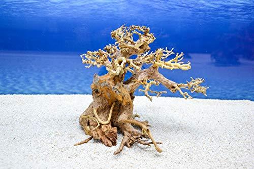 Bonsai Baum M Wurzel Holz Aquarium Deko Aquascaping Wurzel Original Foto Nr.402