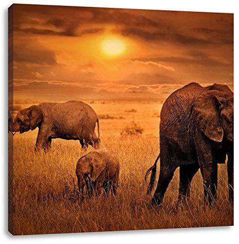 Elefanten bei Sonnenuntergang in der Savanne, Format: 60x60 auf Leinwand, XXL riesige Bilder fertig gerahmt mit Keilrahmen, Kunstdruck auf Wandbild mit Rahmen, günstiger als Gemälde oder Ölbild, kein Poster oder Plakat