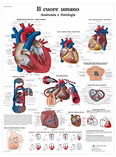 Fisiologia e anatomia al mejor precio de Amazon en SaveMoney.es