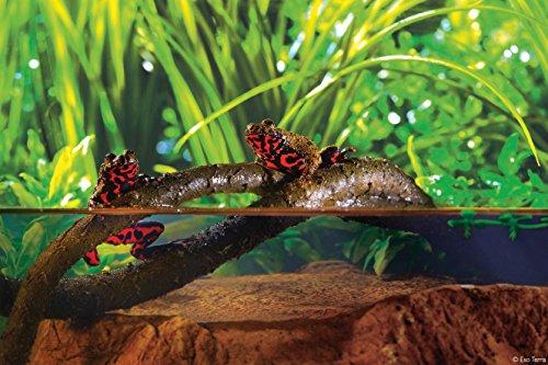 Exoterra Décoration Liane Flexible Grand Modèle pour Reptiles et Amphibiens
