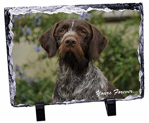German Pointer 'Yours Wirehair Forever'Rock Photo, schiefer (Pointer German Wirehair)