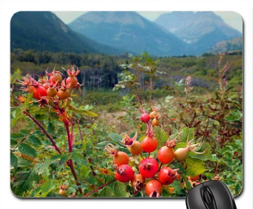 Rocky Mountains and wild roses Mouse Pad, Mousepad (Mountains Mouse (Wild Dog Rose)