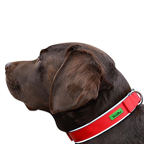 Premium-Dog-Collar-with-Soft-Neoprene-padding-by-Arcadian--Available-in-Stunning-Blue-and-Red-These-Collars-are-Comfortable-Durable-Reflective-and-Water-Resistant-Suitable-for-all-breeds-and-Available