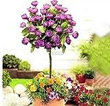 AIMADO 50 Stücke/Beutel Entzückende Blume Wildblume Duftenden Samen Duftenden Blüten Baum Rose Samen