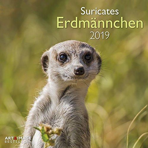 Erdmännchen 2019 - Broschürenkalender, Tierkalender, Wandkalender - 30 x 30 cm
