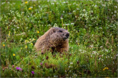 Posterlounge Lienzo 180 x 120 cm: Marmot Fotomagie