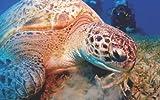Die Unterwasserwelt im Roten Meer