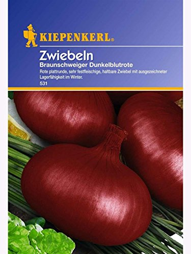 Sperli Gemüsesamen Zwiebeln Braunschweiger Dunkelblutrote, grün