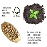 50 x Snackschalen natur 22cm | 100% kompostierbar | edel & dekorativ | Bio Einweg-Geschirr | Einwegschalen perfekt für Finger-Food | Party-Geschirr Holzschiffchen - 5