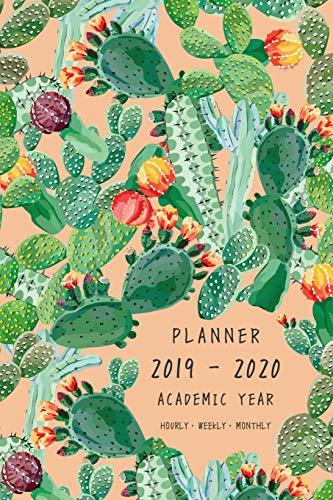 Exotic Cactus Le Meilleur Prix Dans Amazon Savemoneyes