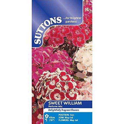 Suttons Seeds 134870 Mélange de graines d'œillets de poète