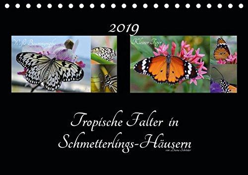 Tropische Falter in Schmetterlings-Häusern (Tischkalender 2019 DIN A5 quer): Das perfekte Geschenk für jeden Schmetterlings-Liebhaber. (Monatskalender, 14 Seiten ) (CALVENDO Tiere)
