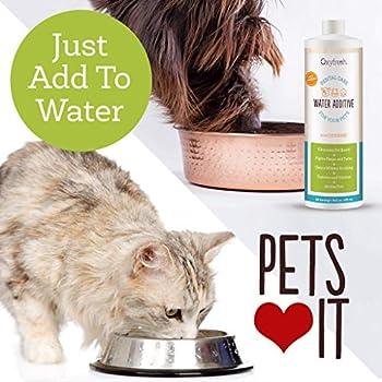 Oxyfresh Premium pour animal domestique Soin dentaire Solution Pour la mauvaise haleine et les caries