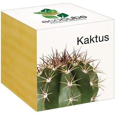 Kaktus im Holzwürfel von Ecocube - Du und dein Garten