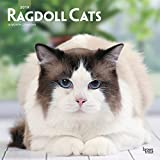 Ragdoll Cats - Ragdoll-Katzen 2019 - 18-Monatskalender (Wall-Kalender)